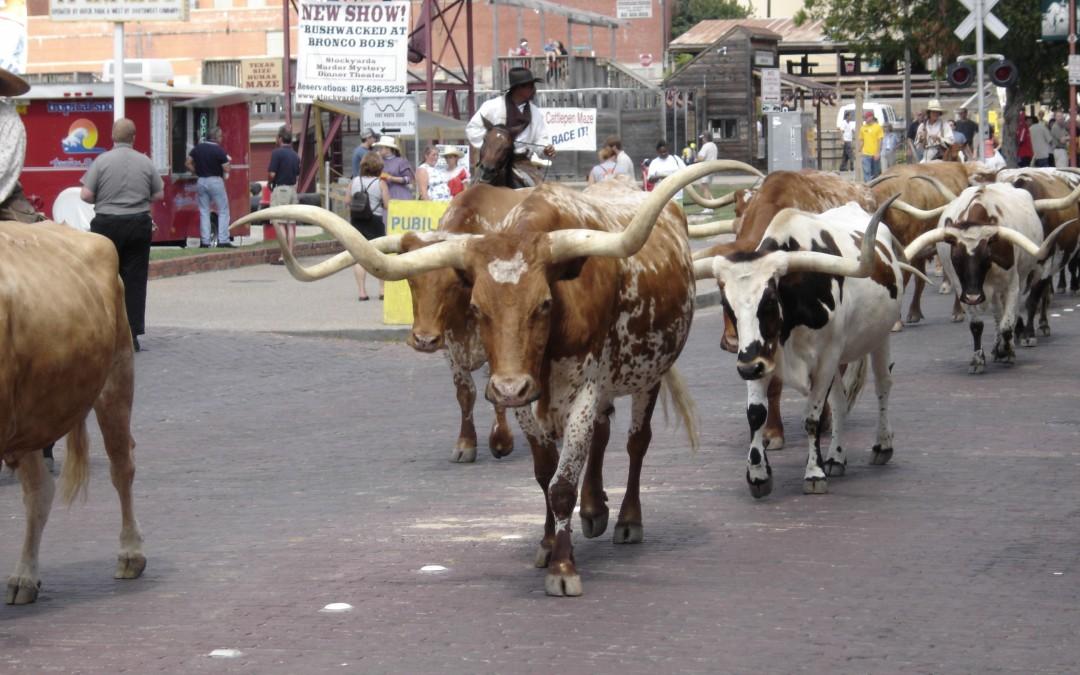 Foto de Viernes: Paseo del ganado por Fort Worth Stockyards