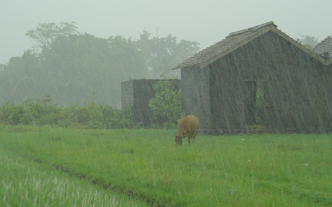 Foto de Viernes: Lluvia en Indonesia