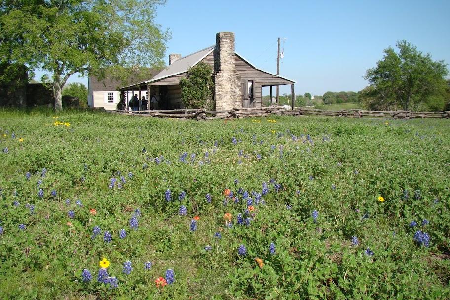 Texas florece paisajes para ser encuadrados