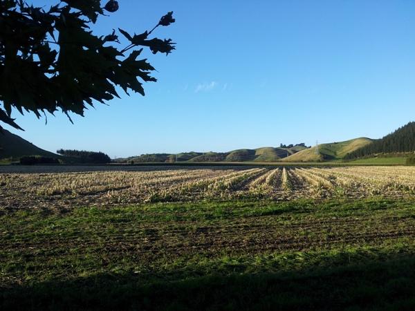 Los viñedos de Auckland