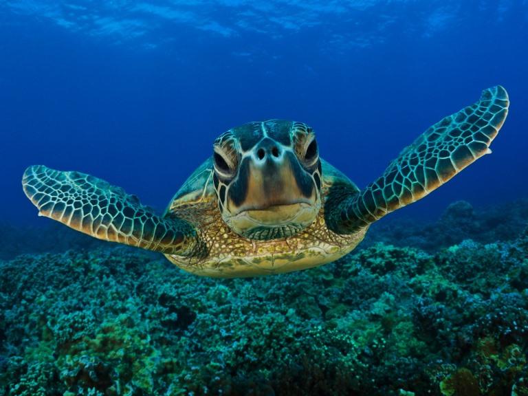 Comienza la temporada de arribo de tortugas marinas en Puerto Vallarta