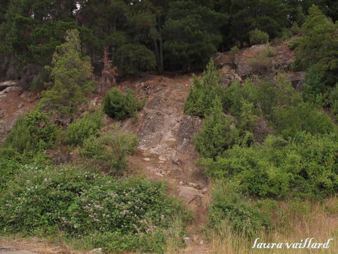 La subida hacia las vías a unos 40 metros de la casa de la foto anterior.
