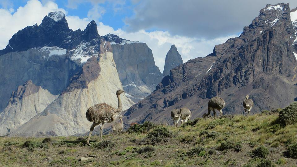 Torres del Paine: las paredes de granitos que se imponen en Chile