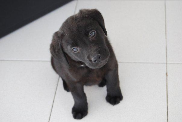 Malbec de cachorro - Maru Alvarez