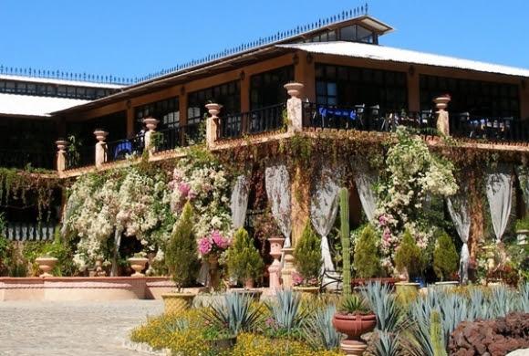 orquideas-mexicanas-vidasurrealista