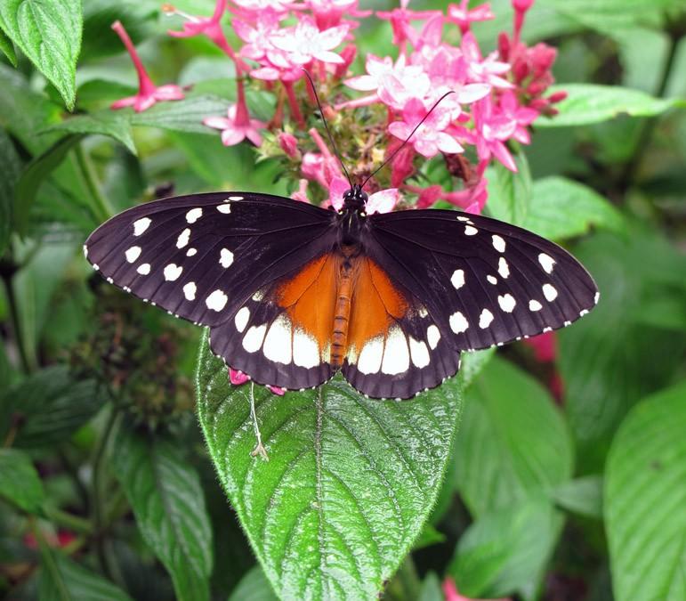Caminar entre mariposas colombianas
