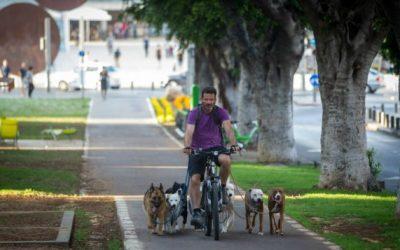 Día del perro el Tel Aviv, la ciudad más dog friendly del mundo